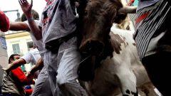 Как попасть на праздник быков в Испании