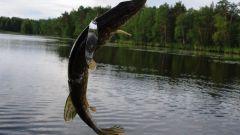 Какую тактику выбрать для ловли рыбы