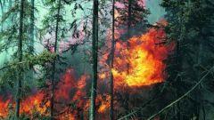 Почему возникают лесные пожары
