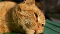 How to cure urolithiasis in the cat