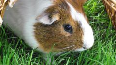 Какие домашние животные лучше всего влияют на детей