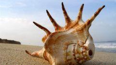 Почему в морских ракушках слышен шум моря