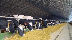 Как вступление в ВТО скажется на сельском хозяйстве