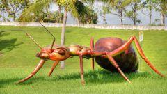 Зачем ученым знать о привычках муравьев
