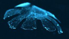 Для чего создан искусственный биоробот-медуза