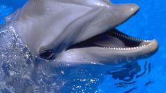 Как общаться с дельфином