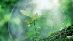 Как прошел Всемирный день охраны окружающей среды