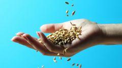 Как не ошибиться при покупке семян