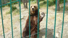 Когда откроется Сафари-парк в Московской области