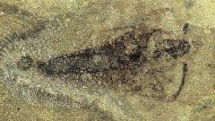 Где нашли самое древнее насекомое