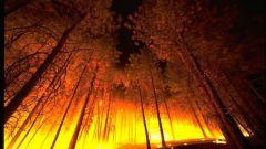 Как остановить лесные пожары