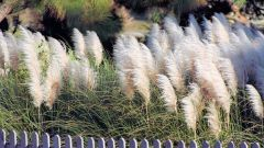Как выбрать многолетние травы для сада