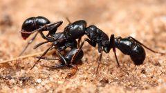 Что общего между муравьями и интернетом