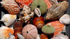 Как сделать украшения из морских ракушек