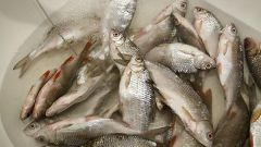 Как делать засолку рыбы