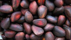 Чем полезен кедровый орех и его скорлупа
