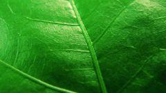 Фотосинтез и хемосинтез - в чем различие?