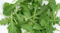 Чем полезен салат с рукколой