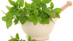Полезные свойства и применение базилика душистого