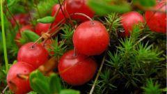 Полезные и лечебные свойства клюквы