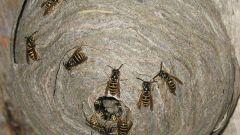 как избавиться на даче от муравьев в доме