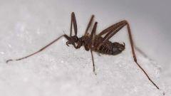 Как зимуют насекомые