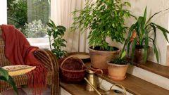Как влияют растения на человека