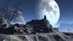 Как волки воют на луну