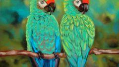 Как из бумаги сделать попугая