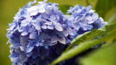 Как изменить цвет цветка