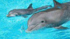 Как дельфины наказывают своих детенышей