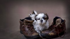 Как заботиться о щенке