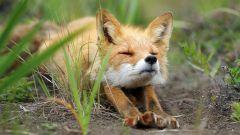 Как животные встречают весну