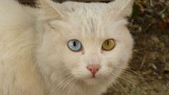 Как видят коты