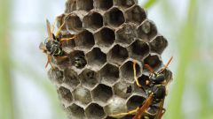 How to bring a hornet's nest