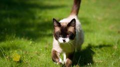 Как двигаются кошки