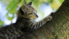 Как приручить кота точить когти