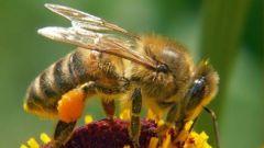 С чего начать пчеловодство
