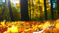 Садовые измельчители листьев и веток: правила выбора
