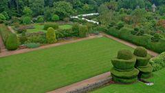 Газонная трава: виды, посадка, уход