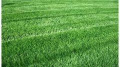 Составляем календарь ухода за газоном: стрижка, полив, удобрение