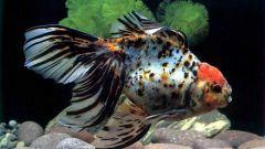 Как ухаживать за аквариумом с рыбками