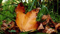 Почему листья сохнут
