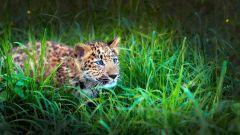 Как учат охотиться звери детенышей
