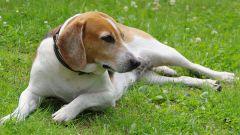 Как уберечь собаку от клещей