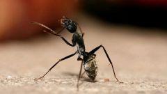 Как бороться с муравьями в квартире