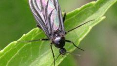 Как избавиться от мух в комнатных цветах