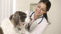 Куда пойти учиться на ветеринара