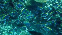 Какая глубина океана