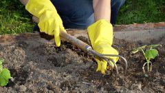 Как улучшить почву